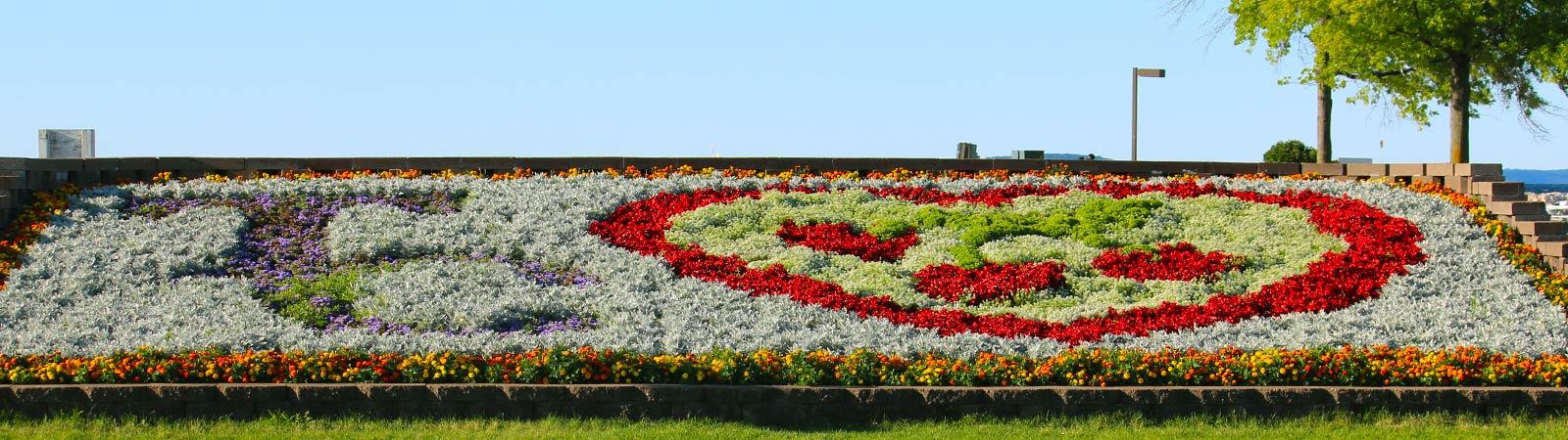 slide-flowers